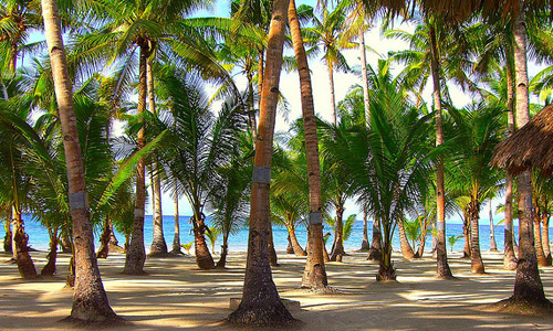Скачать Coconut Trees at Bohol Beach Club