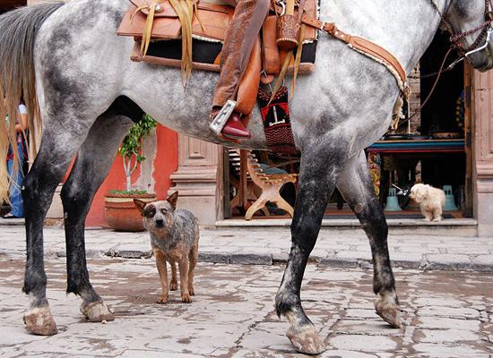 Перейти на Blue Heeler Mexico