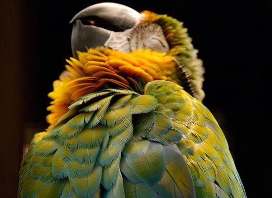 Перейти на Parrot Manila