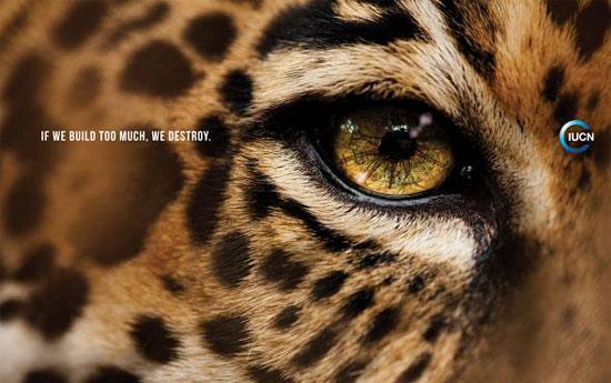 Перейти на Iucn Jaguar