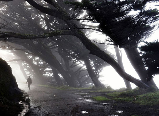 Перейти на Point Reyes, California