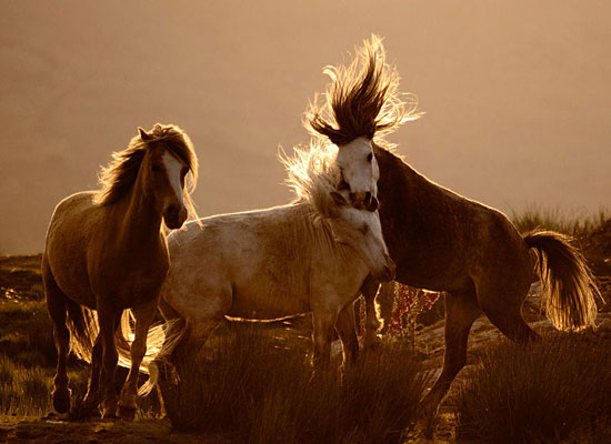 Перейти на Horses, Wales
