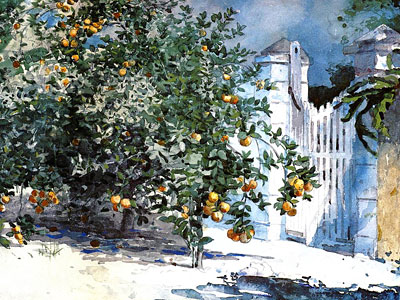 Orange Tree, Nassau
