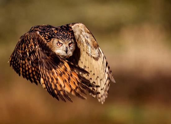 Перейти на Eagle Owl