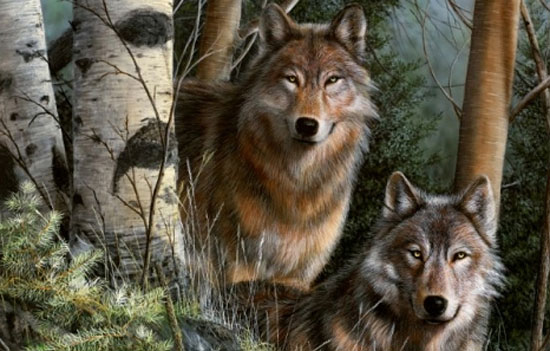 Животные в естественной среде обитания от иллюстратора Kevin Daniel