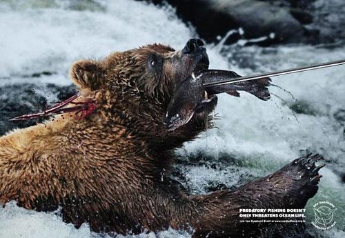 Перейти на Sea Shepherd: Harpoon, Bear