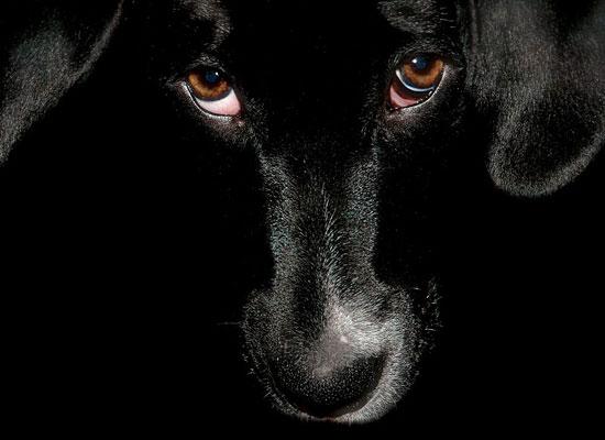 Перейти на Black Dog