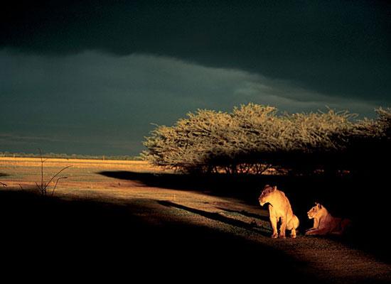 Перейти на Lionesses, Botswana