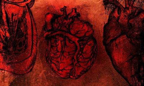 Скачать Photoshop Heart Anatomy Brushes