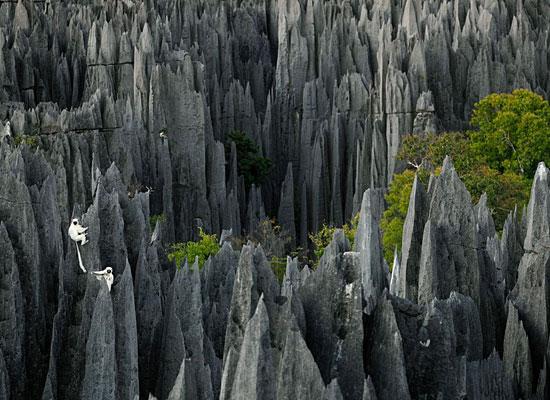 Lemurs Rocks Madagascar Alvarez