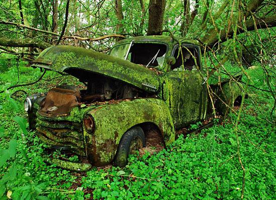 Truck Moss Woods