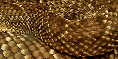 Перейти на Snake Scales