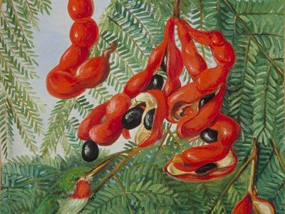 Перейти на The Wild Tamarind Of Jamaica