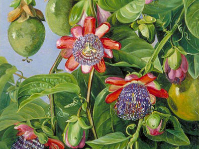 Перейти на Flowers And Fruit Of The Maricojas