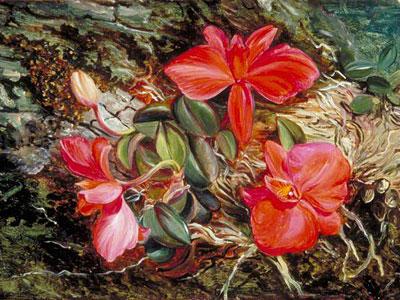 Перейти на Brazilian Orchid