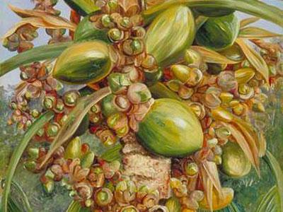 Перейти на Female Coco De Mer Bearing Fruit
