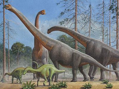 Перейти на Брахиозавры И Дикреозавры
