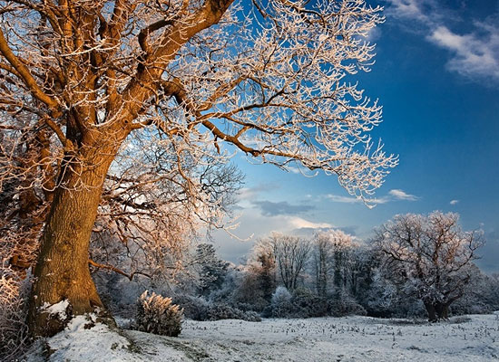 Перейти на Winter Evening