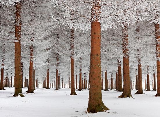 Перейти на Magical Forest