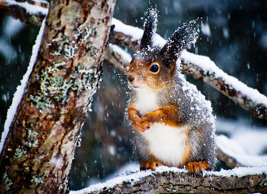 Перейти на Winter Time